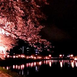 flower hellospring nature spring night