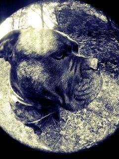 love photography pets & animals black & white