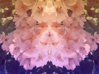 blossom flower gradient pink orange