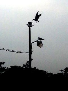 bird black & white photography