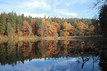 reflection autumn colorful pond forest