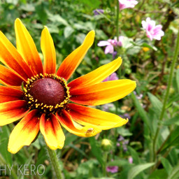 colorful flower nature photography