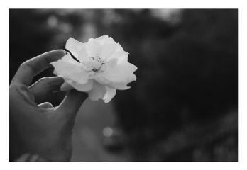 flower photography nature black & white vintage