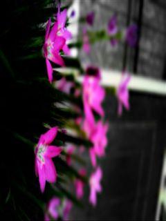 color splash freetoedit hdr photography nature