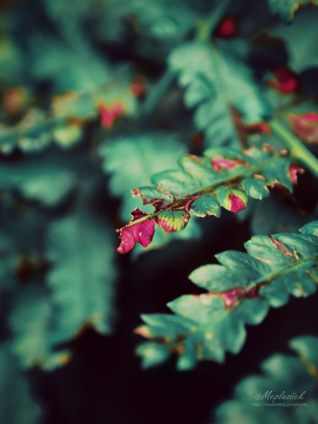 """ Beautiful imperfection ""  (my gear : olympus) #nature #photography #colorful #emotion #art #plant"