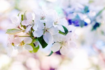spring travel photography nature flower