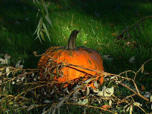 pumpkin pictures