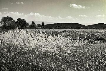 photography nature black