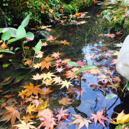 nature autumn japan kyoto
