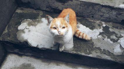 cute photography cat