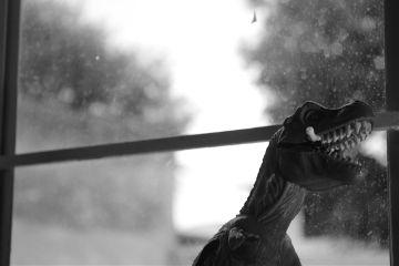 photography black & white blackandwhite dinosaur