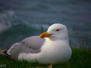 gulls emotions nature photography petsandanimals
