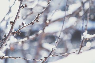 tree snow winter japan photography