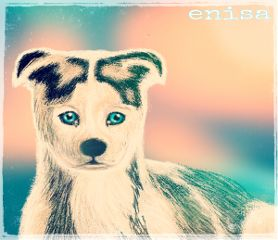 dog drawing digital cute art