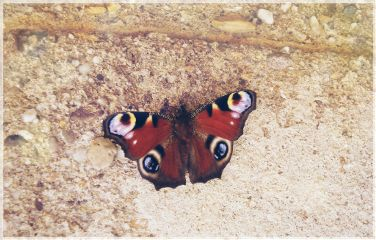 bokeh butterfly emotions beautiful cute