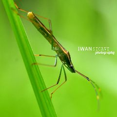 macro nature petsandanimals photography