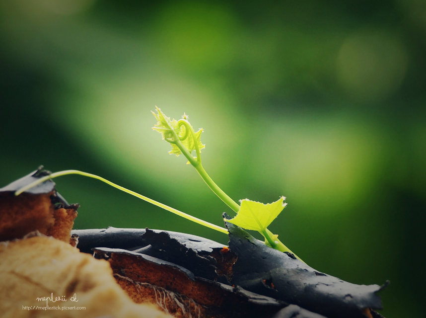 """"""" Enjoy the little things """"  Happy day to you all my Pa friends  #nature  #emotion #photography  #plant #life"""